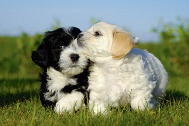 Black Dog Veterinary Services